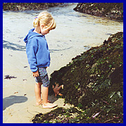 Checking out the starfish